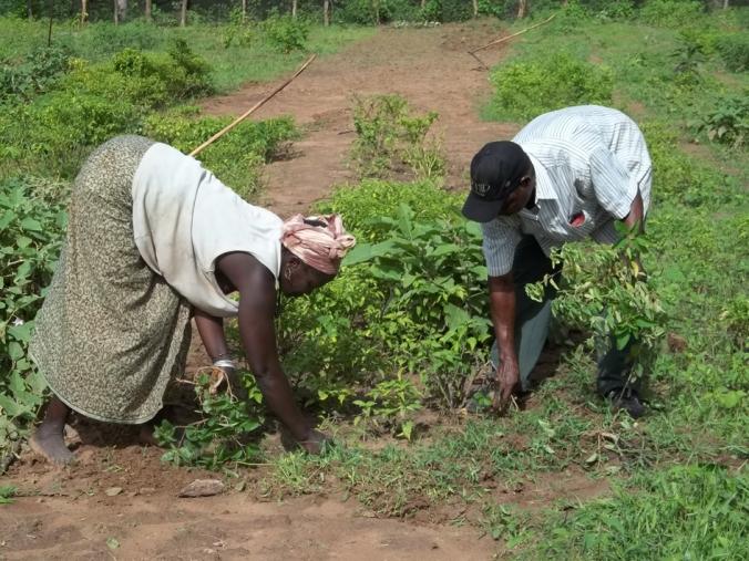 HUMANA AGRICULTURA GUINEA 3